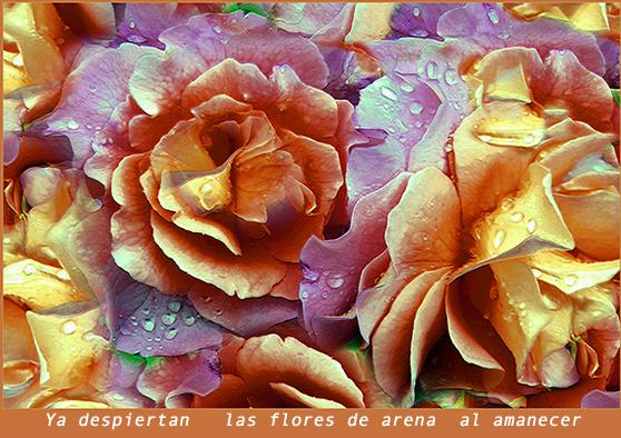 Flores de Arena W